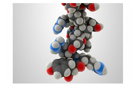 3D render of a neuropeptide